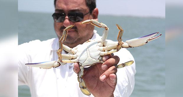Con productores, Federación actualizará pesca de jaiba en Pacífico