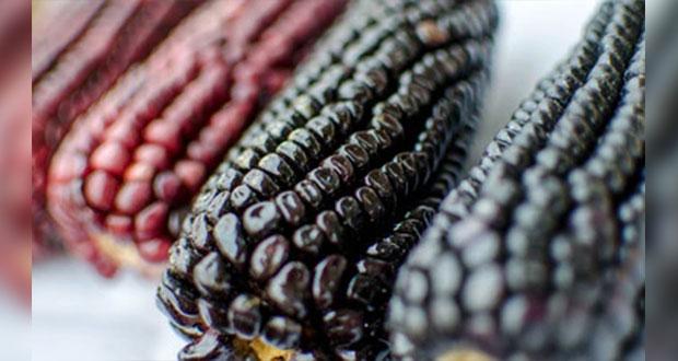 ¿Productor de maíz? Mira las reglas para obtener precios de garantía
