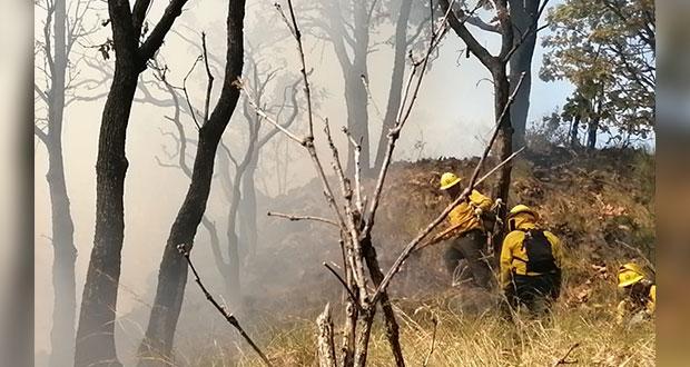 Puebla y 17 entidades más suman 50 incendios forestales activos