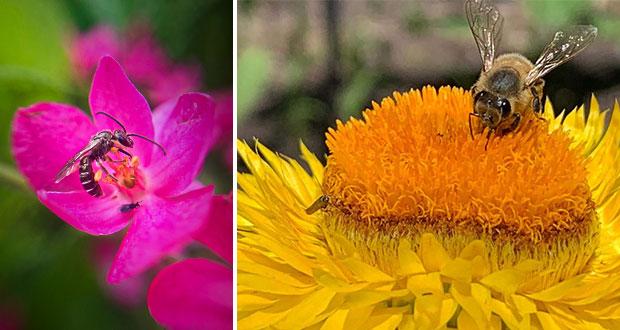 Con jardines Semarnat evitará extinción de especies polinizadoras
