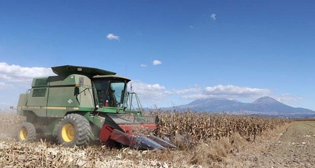 Actividades agropecuarias continuarán durante contingencia: SDR