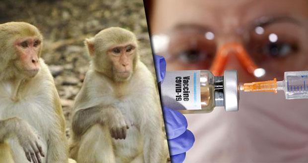 Vacuna de Oxford contra coronavirus funciona en monos, afirman