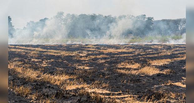 Para prevenir enfermedades e incendios, no quemes campos para cultivo