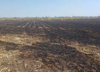 Quemas agropecuarias se reducen 25% en Puebla y 6 entidades: Sader