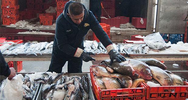 En abril, Sader retiene 178.8 toneladas de pesca presuntamente ilegal