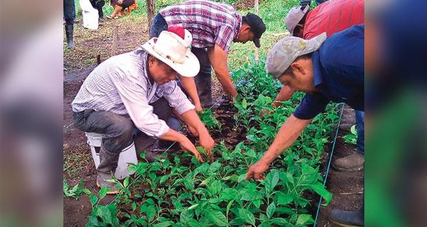 En Puebla, programa Sembrando Vida se amplía a 10 mil agricultores