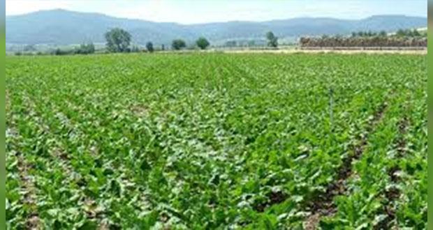 Puebla, 5° sitio nacional en apoyos de producción para agricultores