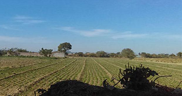 Comuna sigue sin regresar 170 hectáreas a La Resurrección, acusan