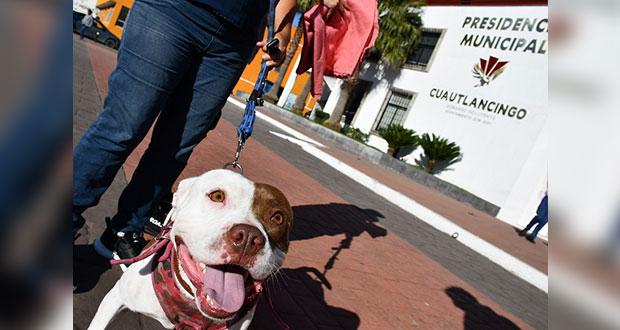 Cuautlancingo, con nuevo reglamento de tenencia y control de mascotas