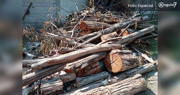 Medio Ambiente municipal permite a hijo de exdiputado talar árboles, acusan. Foto: Especial