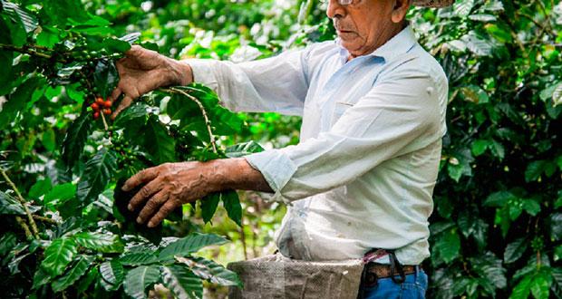 En Puebla, van 117,370 apoyados con Producción para Bienestar