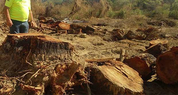 Semarnat sugiere denunciar presunta tala ilegal en Tetela de Ocampo. Foto: Ilustrativa