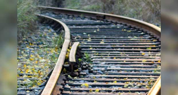 Amparo contra Tren Maya con tintes políticos; no afectará selva: AMLO