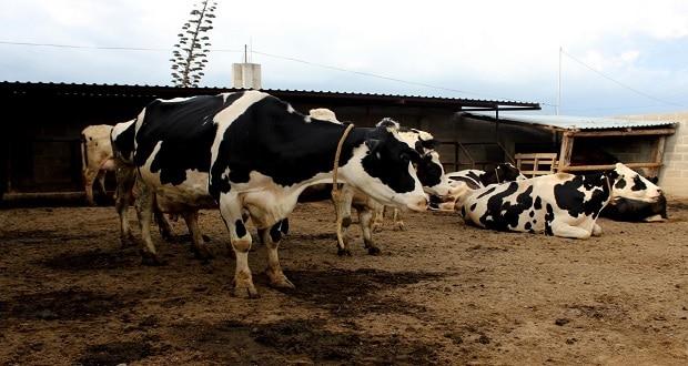 Aumenta 40% exportación de ganado bovino mexicano a Estados Unidos