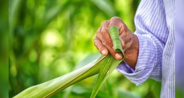 Con enfoque agroecológico, superarán rezago comunidades indígenas