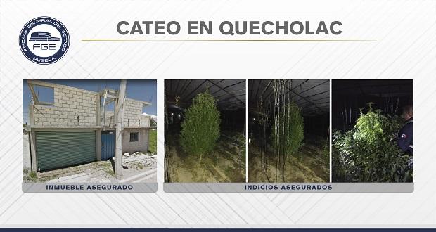 En Quecholac, Fiscalía halla invernadero de plantas de marihuana