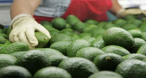 Superávit agroalimentario alcanza 7.4 mmdd en 1S; sube 19%