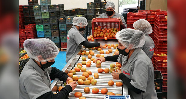 Productores de Aquixtla envían primer embarque de tomate a EU