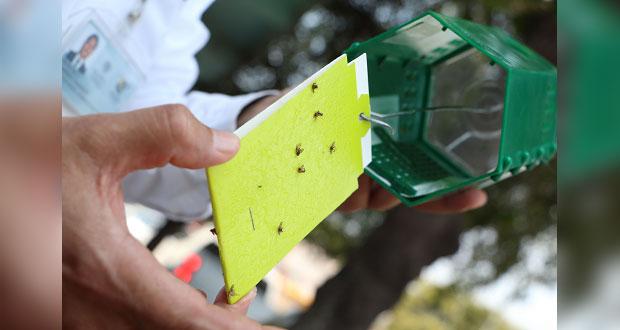 Plaga de mosca del mediterráneo está controlada: Senasica