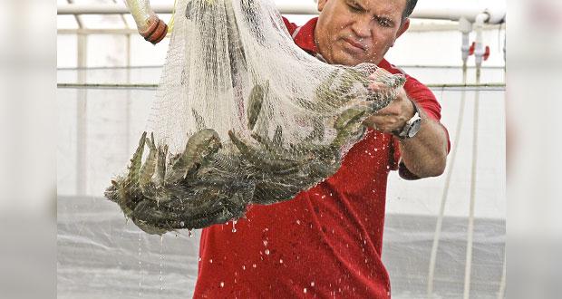 Sader estima que producción pesquera y acuícola crezca 15% en 2024
