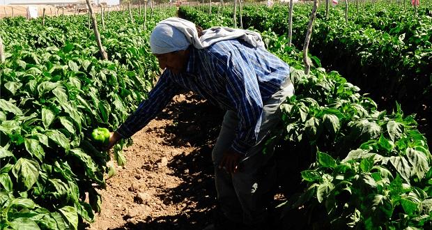 Acuerdan capacitar en inocuidad alimentaria para pequeños productores