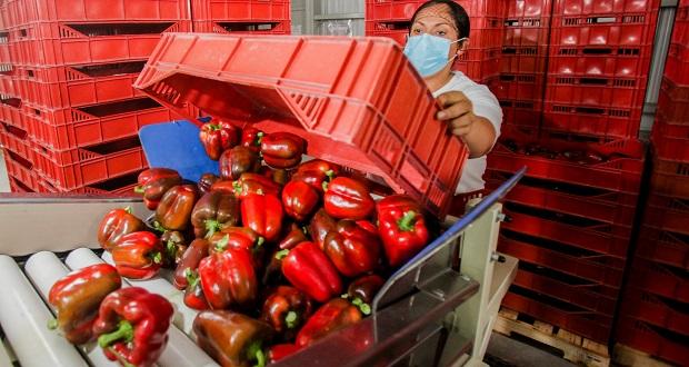 Aumenta el 5% de exportaciones agropecuarias y pesqueras