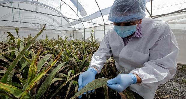 México, referente en control biológico contra plagas: Sader