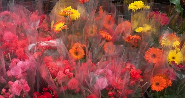Rosas, gladiolas y más flores, garantizadas para 10 de Mayo: Sader