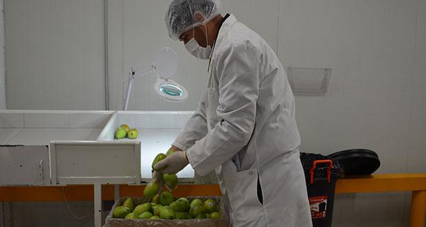 ¿Investigas sanidad en alimentos? Checa este sitio de Sader