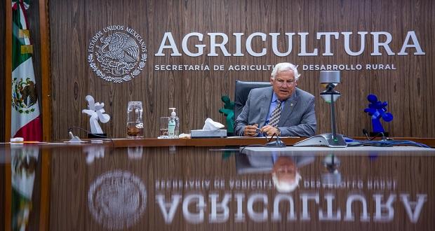 Ante cambio climático, México impulsa innovación en agricultura: Sader