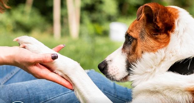 Necesario, reducir tiempo con mascotas por retorno laboral: experto