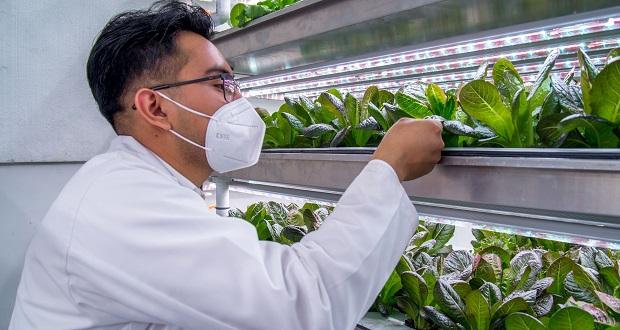 Sader promueve agricultura autosustentable en productores pequeños