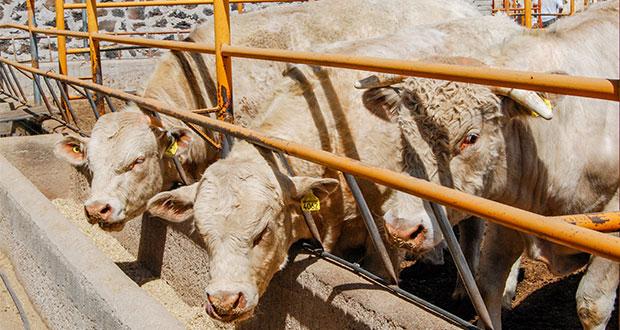 Sader sigue con identificación de ganado y colmenas