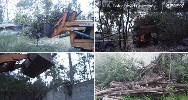 Sedus permite tala de árboles de La Calera en predio de hijo de exdiputado