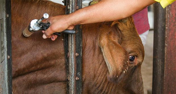 Capacita Sader a veterinarios para identificar enfermedades raras