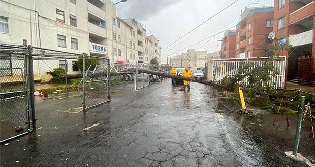 Reportan árboles caídos tras intensa lluvia en la ciudad de Puebla