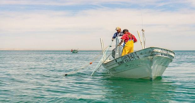 Comienza temporada de capturas de especies marinas: Conapesca