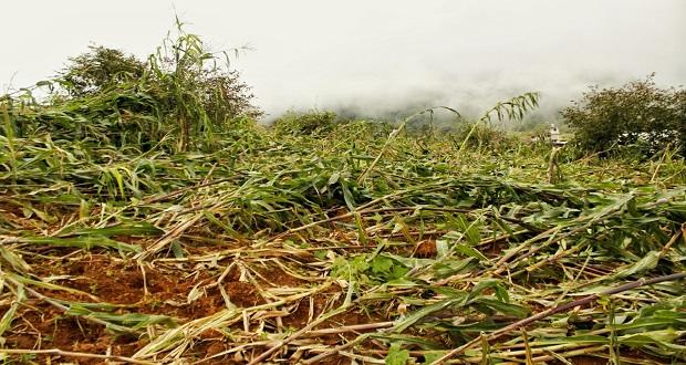Por daños a cultivos tras Grace, SDR da más de 26 mdp a productores