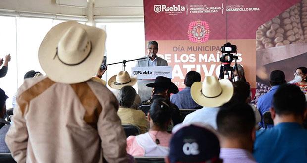 17 comunidades ejidales de Puebla, guardianes de maíz nativo